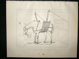 Miles Practical Farriery C1875 Antique Print. Method of Slinging The Horse